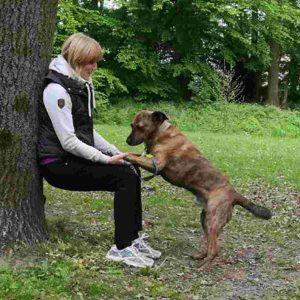 Hundetraining in Fitnessübungen einbauen