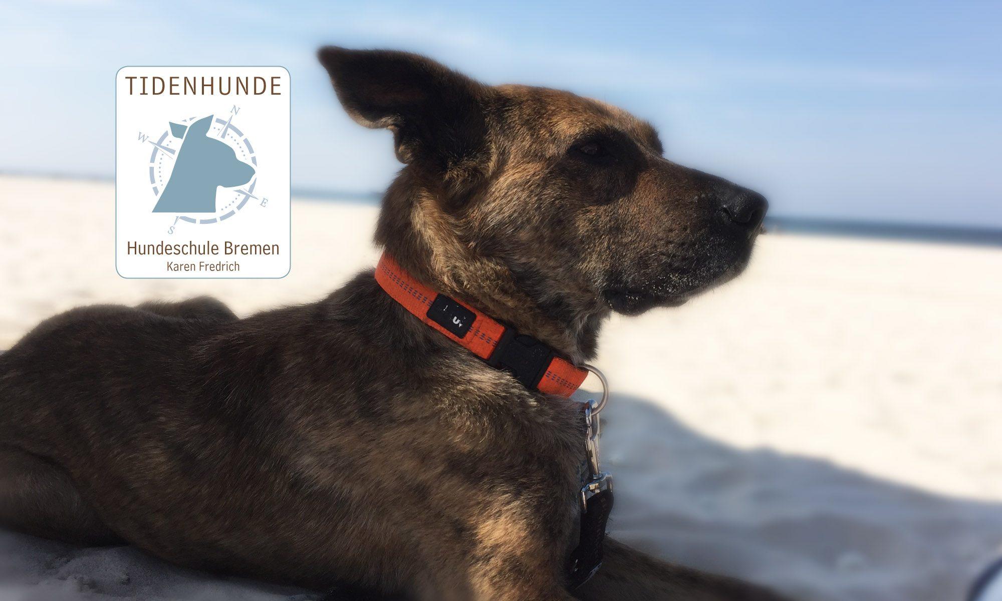 Tidenhunde mobile Hundeschule