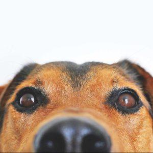 Hundetraining für spezielle Fragen