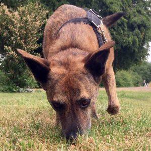 Schnüffelspaß zur Auslastung + Hundetraining