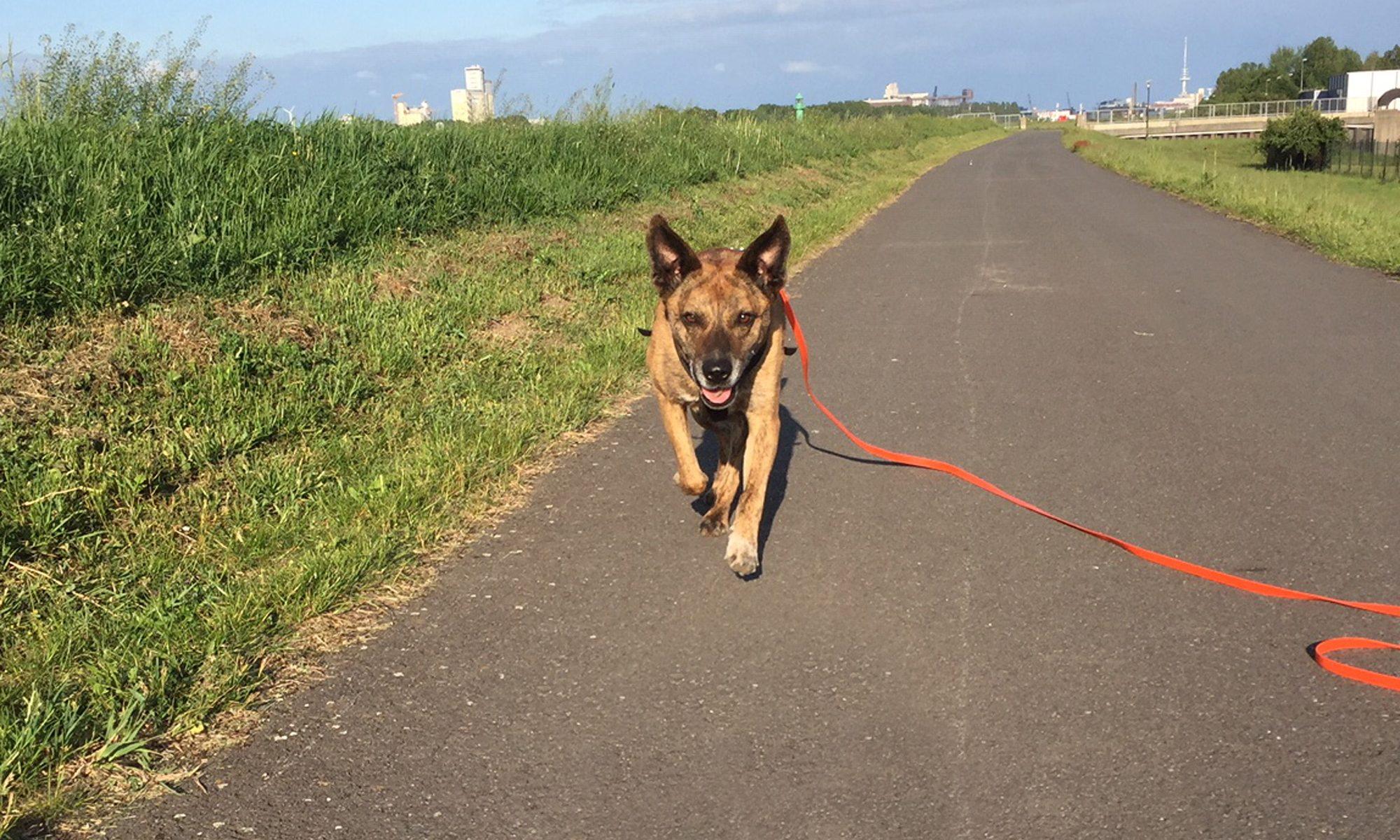 Trainingsspaziergänge